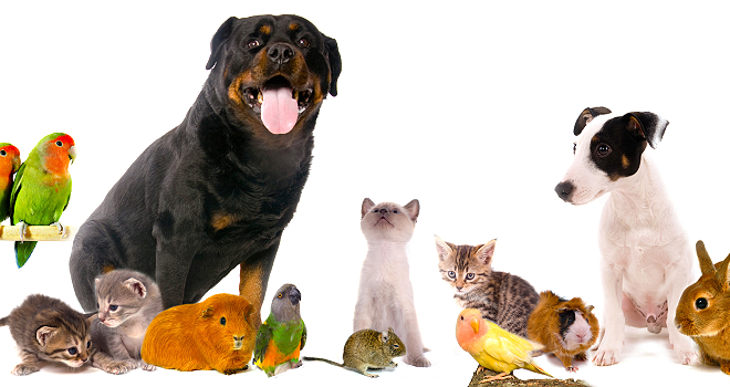 All Things Pets | Your Resource for the Best and Proper Pet Care