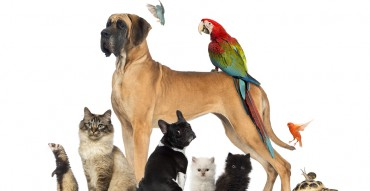 All Things Pets - Animal Group