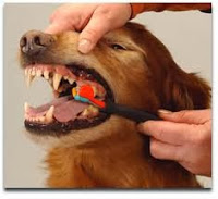 All Things Pets - Brushing Dog's Teeth
