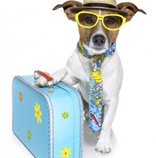 All Things Pets - Pet Travel